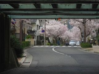 ガードの向こうは桜.jpg