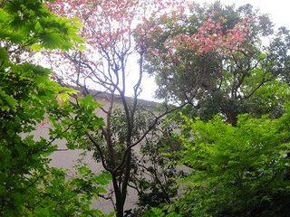 新緑の庭.jpg